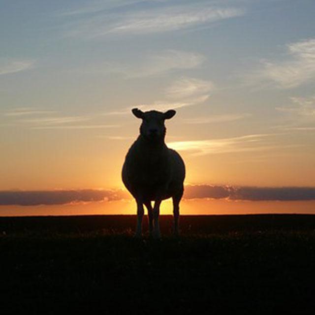 Sunset Sneek