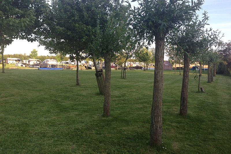 Tentplaats in de boomgaard